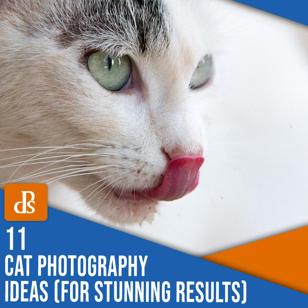 11 ideias de fotografia de gato para resultados surpreendentes