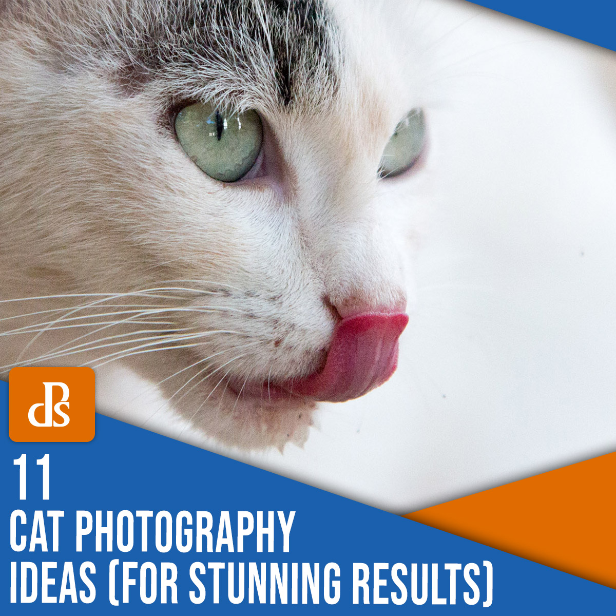 11 cat photography ideas for stunning results