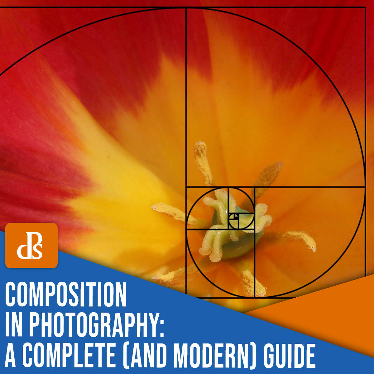 composition in photography: a complete (and modern) guide