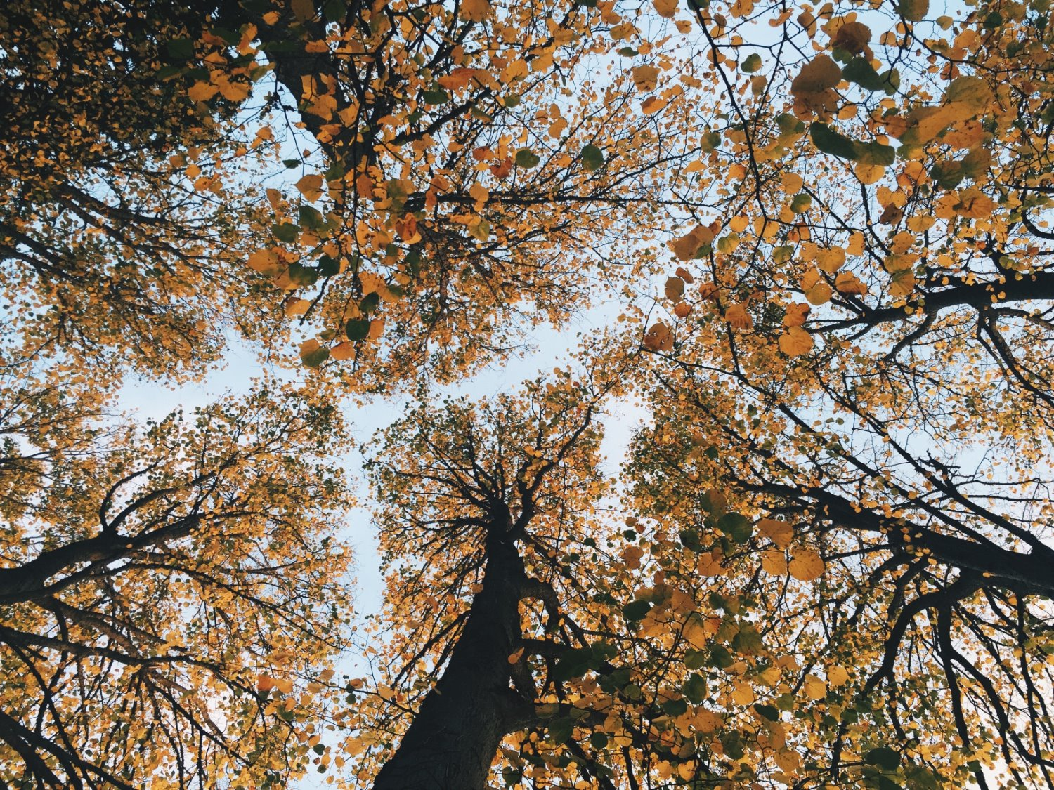 bright sunlight looking up at trees