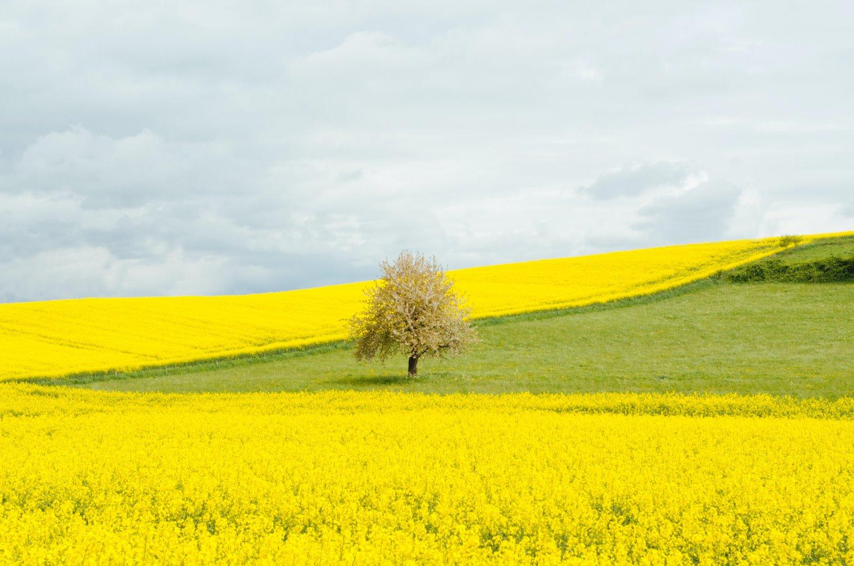 árvore em um campo fotografia de paisagem