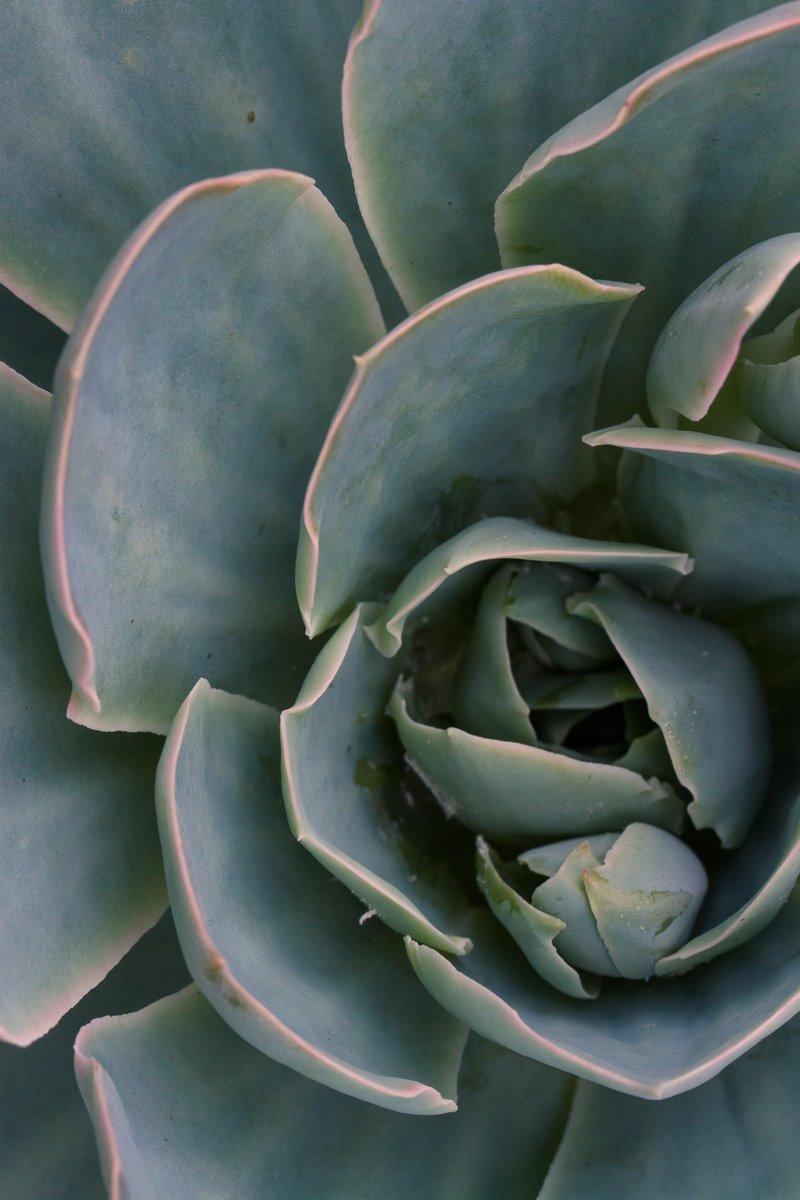 macro photography succulent center