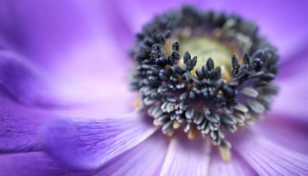 Macro Photography for Beginners – Part 2