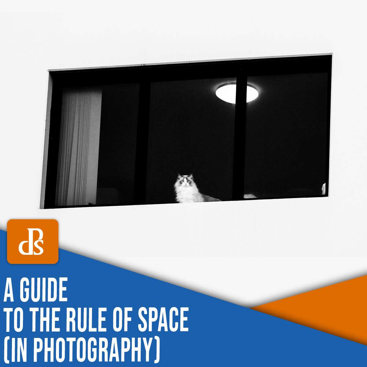 rule of space in photography: a comprehensive guide (+ examples)