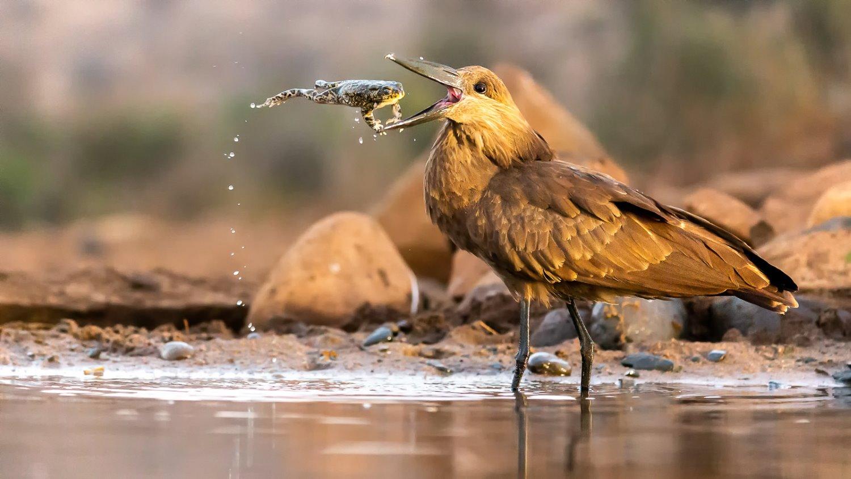 Finalista para Fotógrafo de Pássaros do Ano