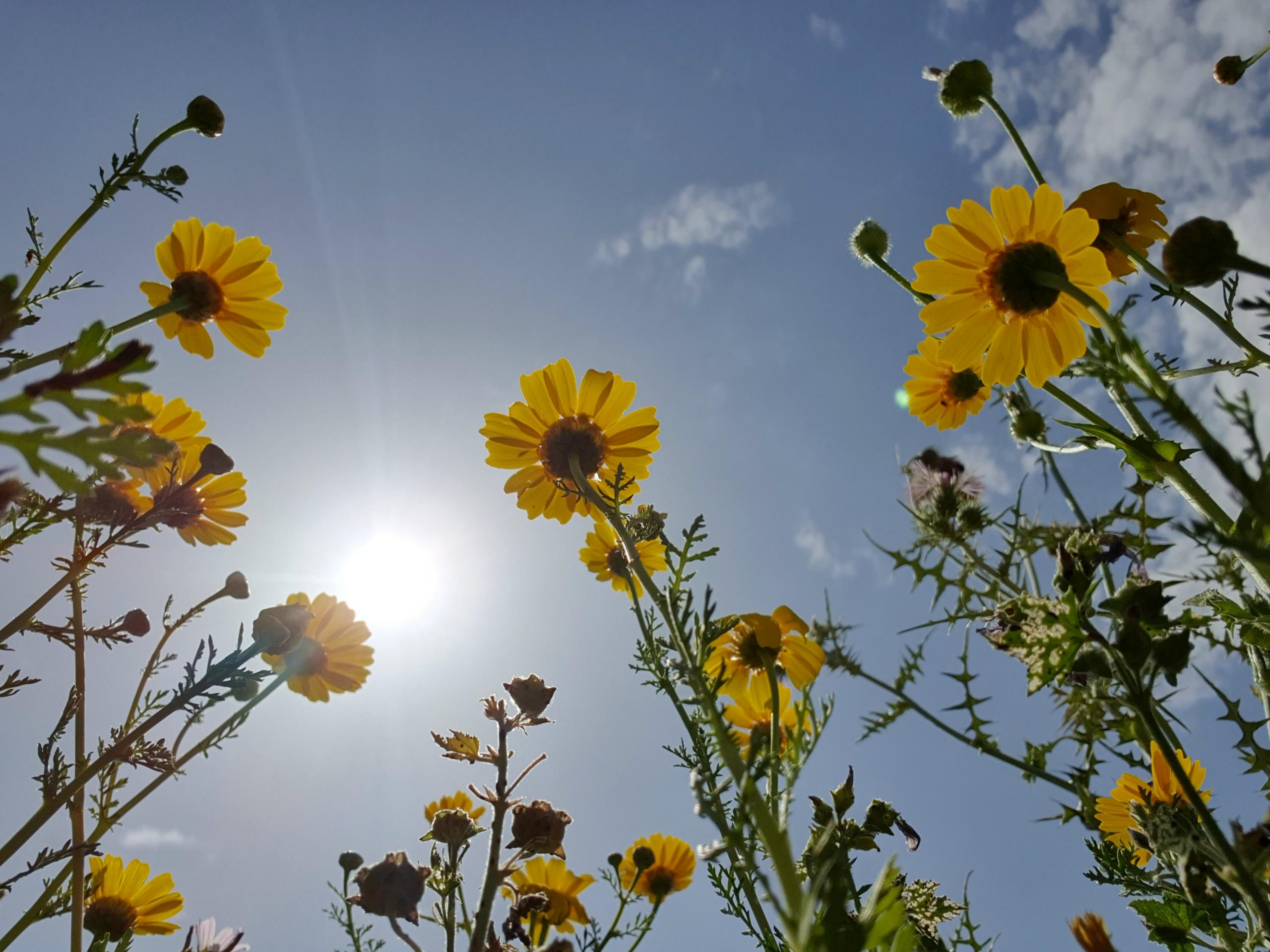 olhando para uma ideia de fotografia de telefone de flores