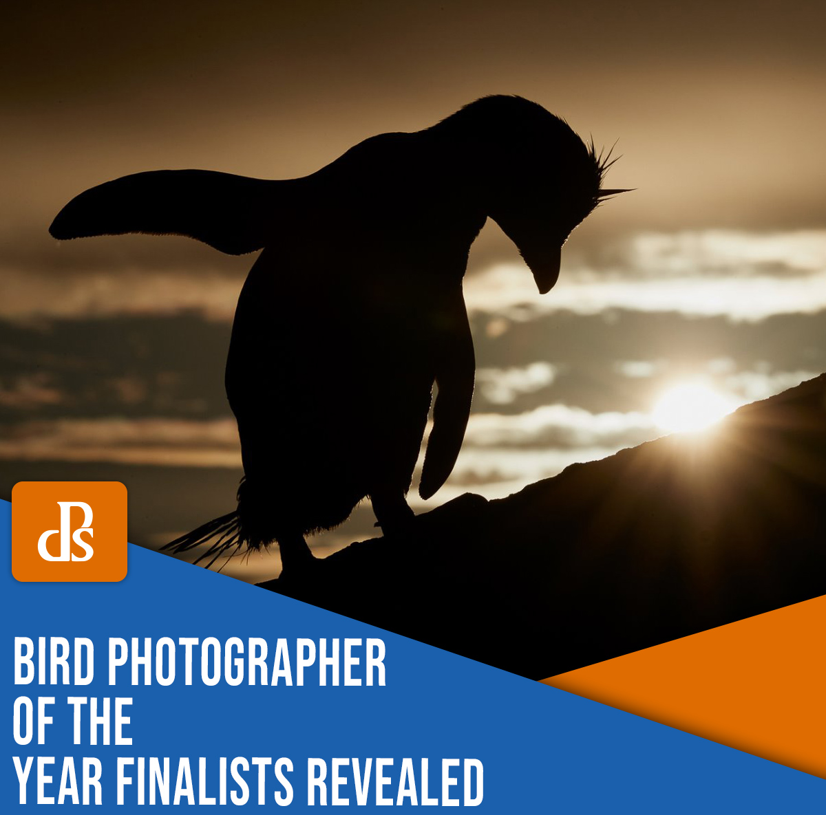 https://i0.wp.com/digital-photography-school.com/wp-content/uploads/2021/04/bird-photographer-of-the-year-finalists-1001.jpg?resize=1200%2C1185&ssl=1
