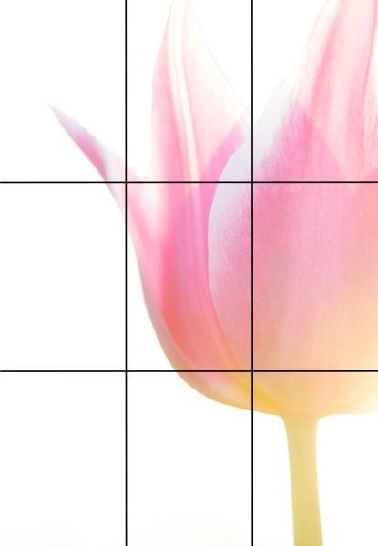 flower rule of thirds example