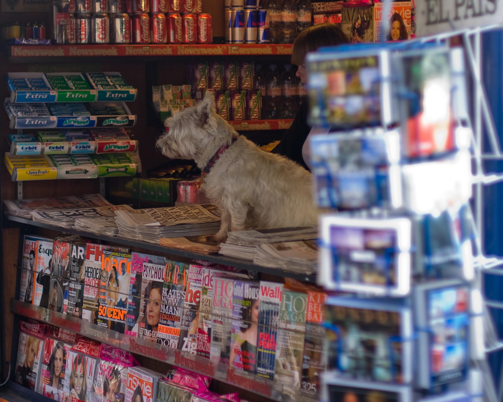 Cachorro em um jornal