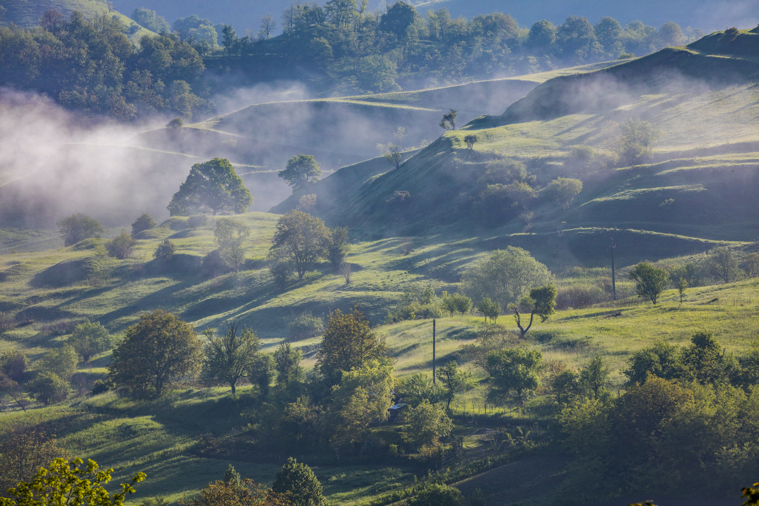 misty rolling hills and trees