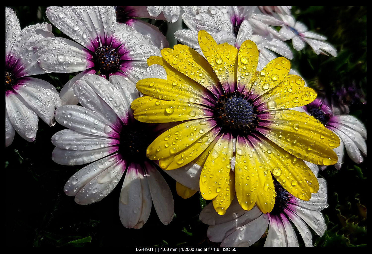 flowers with water droplets