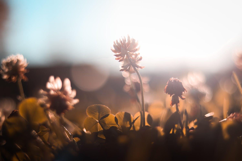 shallow depth of field flower