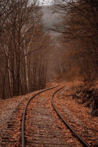 A falta de profundidade de campo de trilhos de trem na floresta