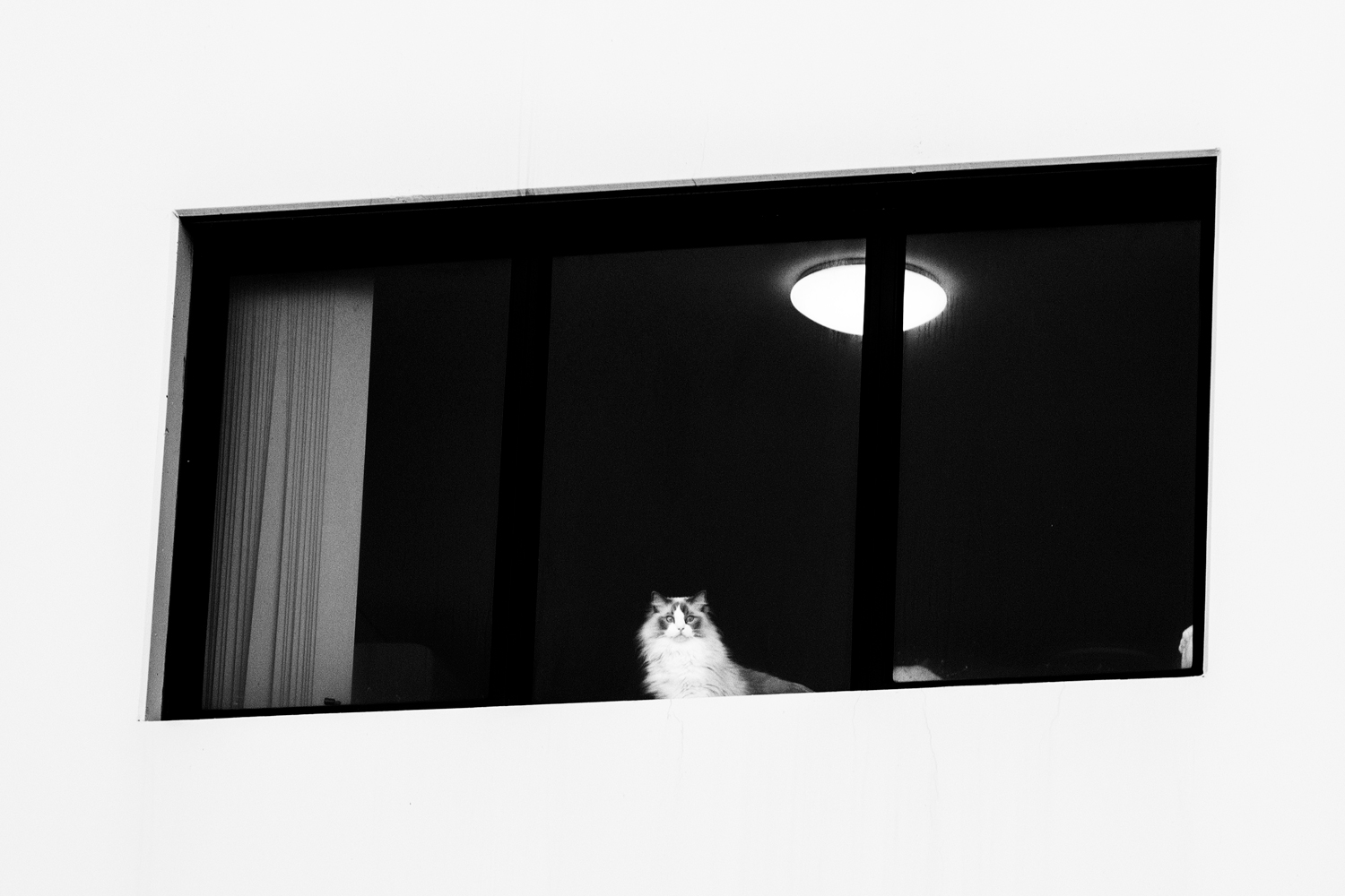 cat in a window positive space