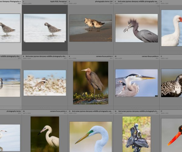 Where Are My Lightroom Photos, Presets, and Catalogs Stored? (2021)