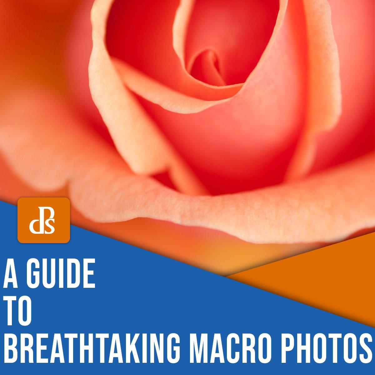 a guide to breathtaking macro photos