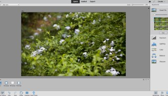 Photoshop Elements vs Photoshop: Which Editor Is Right for You? (2021)