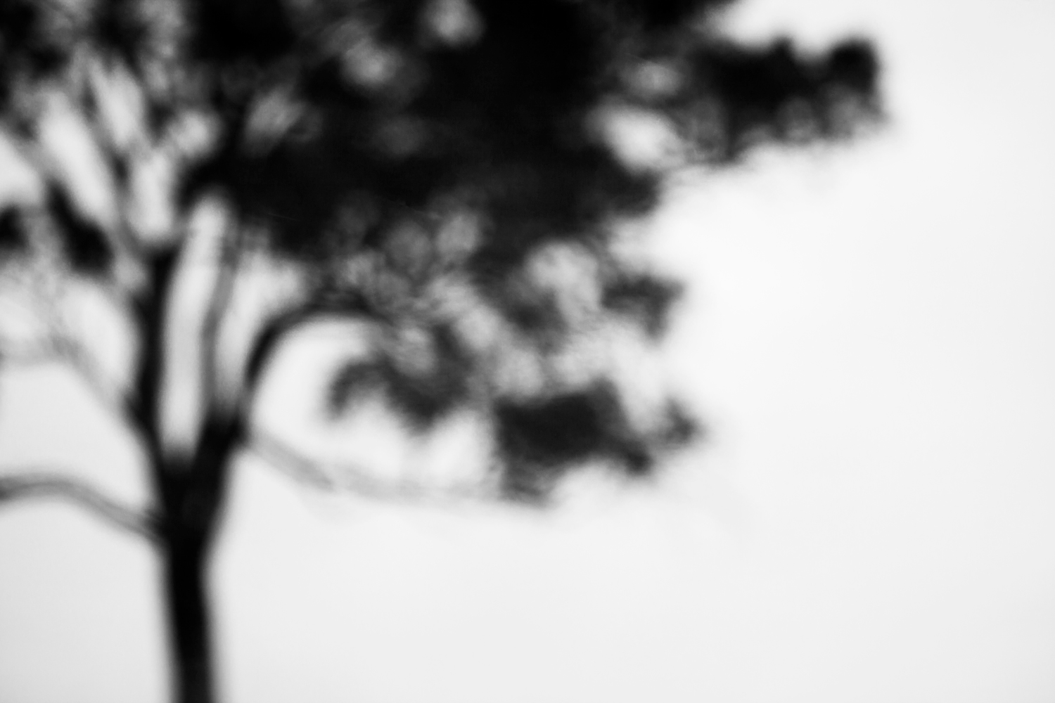 Types of photography minimalist out-of-focus tree