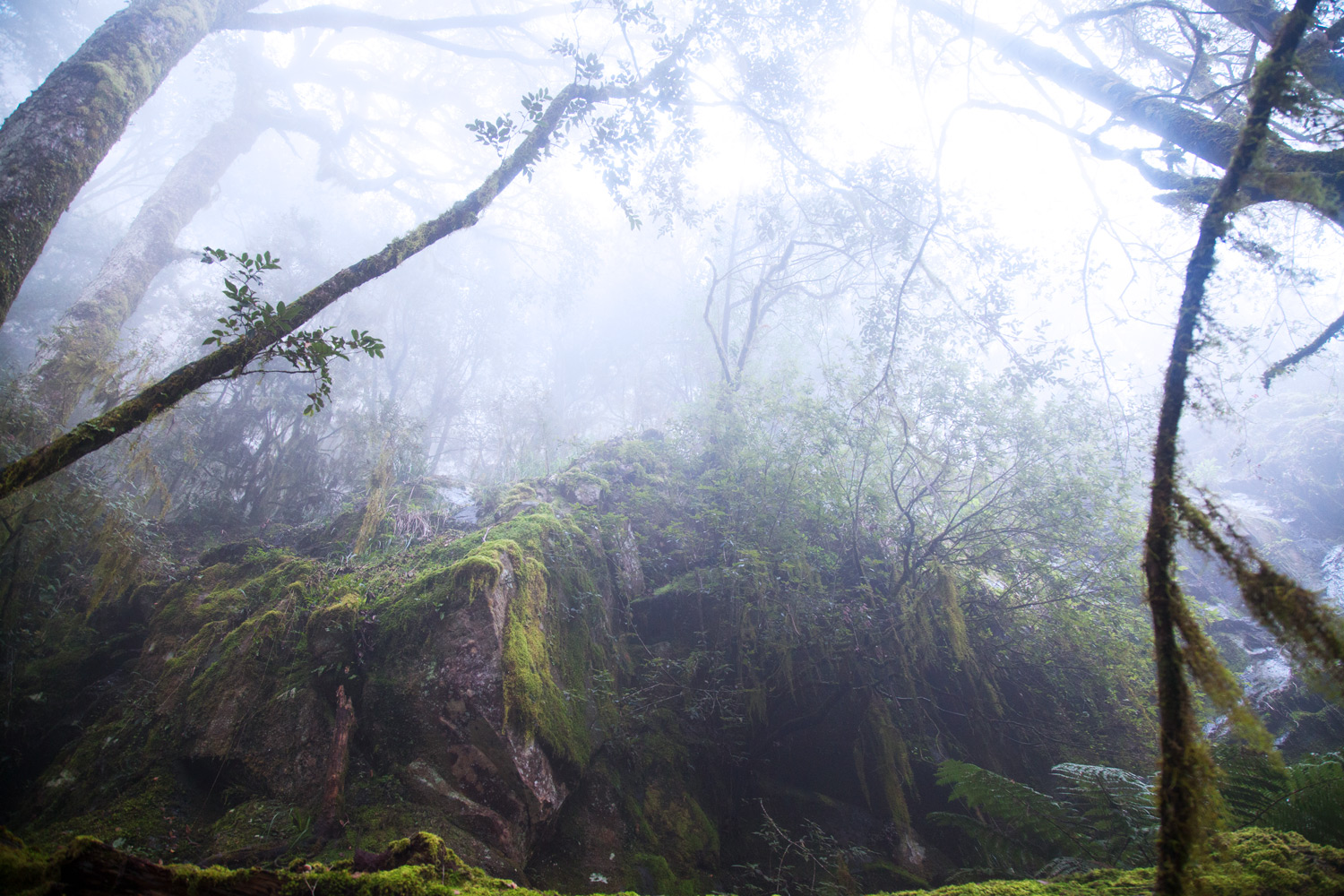 nature misty forest