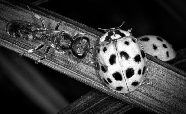 Weekly Photography Challenge – Insects