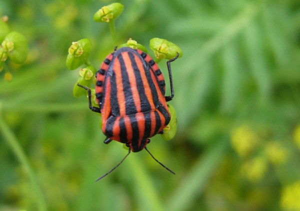 Weekly Photography Challenge – Get Buggy With It