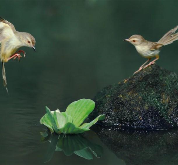 Image: By John&Fish