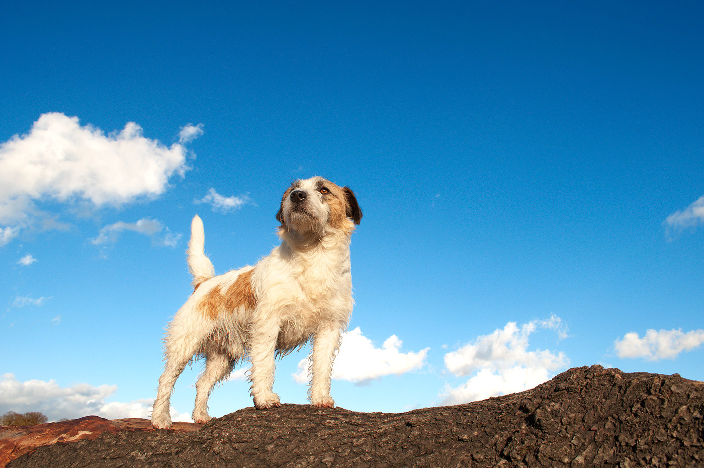 F/orme Pet Photography