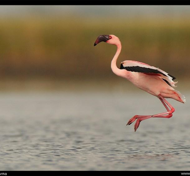 Image: By Jayanth Sharma