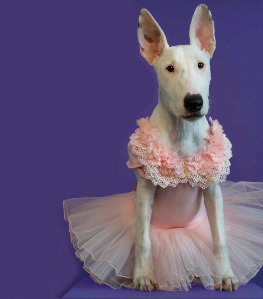Un concurso donde moda, lenguaje y fotografía son los protagonistas
