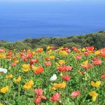 淡路島観光+写真+グルメ情報