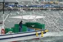 関西の春の訪れ:イカナゴ漁(解禁)の様子を写真撮影07