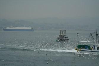 関西の春の訪れ:イカナゴ漁(解禁)の様子を写真撮影14
