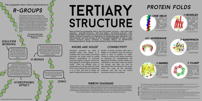Protein Folding  Structure Prediction Posters  Examples of Student Work  Illinois Math and