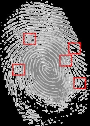 A picture of a fingerprint