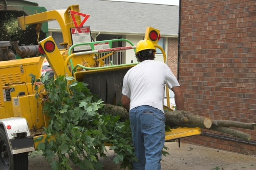 A tree service contractor putting a large tree limb into a wood chipper
