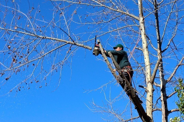 A man waring a hard hat using a chainsaw to cut a tree branch. The CSLB may request documentation proving your experience before you can take the exam for your tree service license