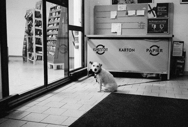 supermarket dog