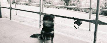 collie supermarket dog