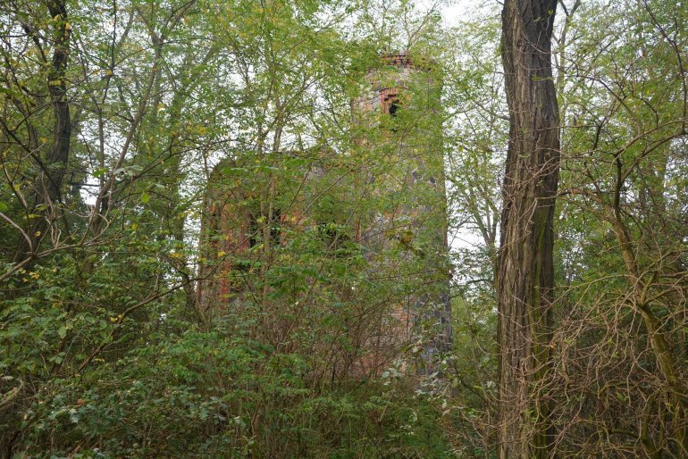 abandoned castle overgrown forest
