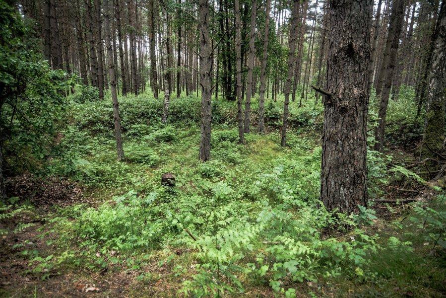 bombenkrater weisse haeuser rechlin mecklenburg urbex lost places