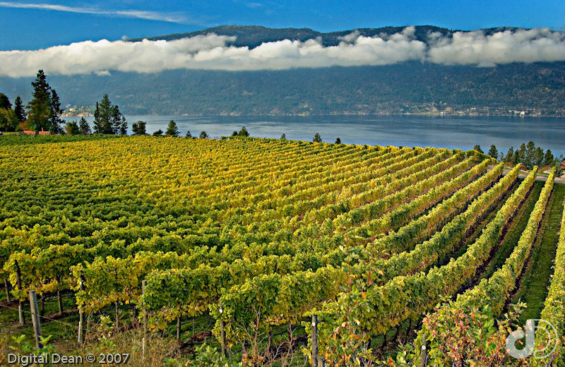 Autumn Vineyard | ID 11216