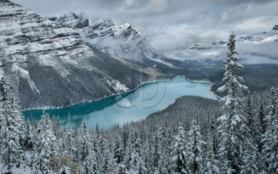 Peyto Lake | ID 11126
