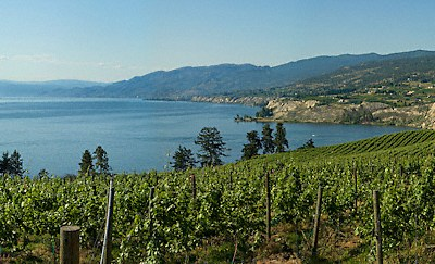 Vineyard on the Lake | ID 11224