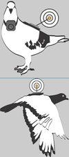 Pigeon_blog