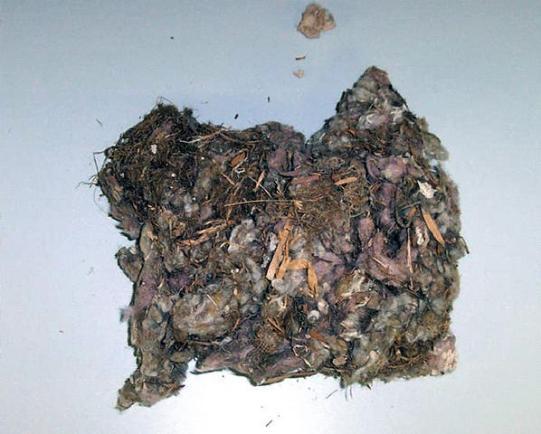 A rat's nest found during the Montpelier Restoration.