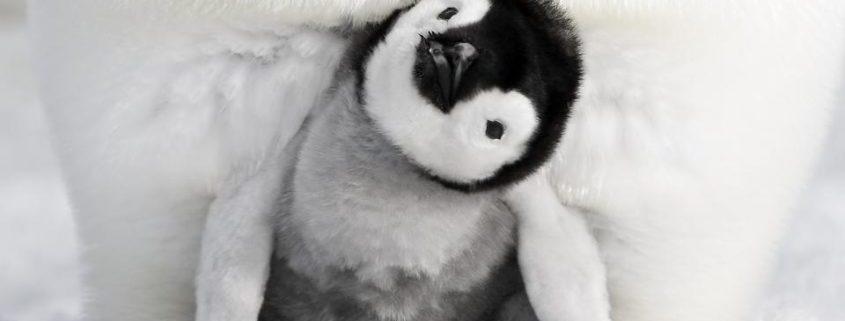 Die Reise der Pinguine 2 - Szenenbild