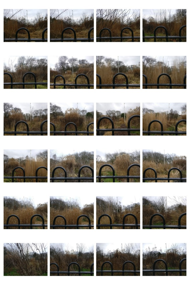 Submission Site 2 contact sheet Whitworth Grasses
