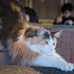 渋谷の猫カフェ、MoCHAで猫の写真撮りまくり