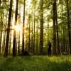 水元公園のメタセコイアの森で新緑を撮ってきた