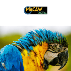 about macaw digital - about us